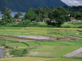 Paddy Fields at Tuk Tuk, Samosir Island, Lake Toba, Sumatra, Southeast Asia Photographic Print by Robert Francis