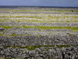 Stone Walls on Inis Mor (Inishmore), Aran Islands, Republic of Ireland Photographic Print by Andrew Mcconnell