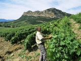 Vineyards, Patrimonio Area, Corsica, France Photographic Print by Yadid Levy