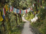 Path and Prayer Flags, Mcleod Ganj, Dharamsala, Himachal Pradesh State, India Photographic Print by Jochen Schlenker