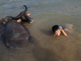 A Boy Bathes with His Water Buffalo in the Mekong River, Near Kratie, Eastern Cambodia, Indochina Photographic Print by Andrew Mcconnell