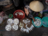 Fresh Fish at the City Market, Da Nang, Vietnam, Indochina, Southeast Asia Photographic Print by Andrew Mcconnell