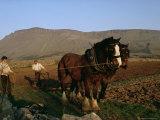 Horse and Plough, County Sligo, Connacht, Eire (Republic of Ireland) Photographic Print by Christina Gascoigne