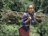 Girl Carrying Fuel Wood Bundle on Her Back, Chilima Forest, Ethiopia, Africa Photographic Print by Dominic Harcourt-webster