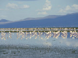 Flamingoes, Tanzania, East Africa, Africa Photographic Print by Robert Francis