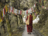 Buddhist Monk Walking Down Path, Mcleod Ganj, Dharamsala, Himachal Pradesh State, India Photographic Print by Jochen Schlenker