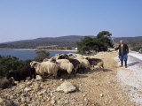Shepherd and Sheep, Island of Skiros, Sporades, Greece Photographic Print by Storm Stanley