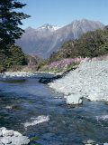 Cascade Creek and Stuart Mountains, South Island, New Zealand Photographic Print by Ian Griffiths