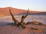Death Vlei, Namib Naukluft Park, Namibia, Africa Photographic Print by Storm Stanley
