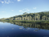 Trees Reflected in Still Water, Everglades, Noosa, Queensland, Australia Photographic Print by R Mcleod