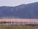 Flamingos, Lake Bogoria, Kenya, East Africa, Africa Photographic Print by Storm Stanley