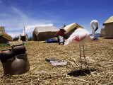 Flamingo Sharing Life with Indigenous Uros People on Floating Island, Lake Titicaca, Peru Photographic Print by Marco Simoni