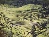 Terraced Fields as Seen in Winter from Nagarkot, Himalayas, Kathmandu Valley, Nepal Photographic Print by Don Smith