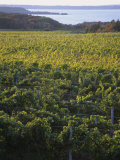 Vineyards Near Traverse City, Michigan, USA Photographic Print by Michael Snell
