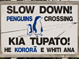 Sign Warning Drivers About Penguins in the Road, Wellington, North Island, New Zealand Lmina fotogrfica por Don Smith