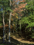 Woods in Autumn, Hudson Valley, New York State, USA Photographic Print by Nedra Westwater