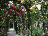 Arches Covered with Roses, Generalife Gardens, Alhambra, Granada Photographic Print by Nedra Westwater