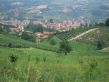 Vineyards Around Dogliani, the Langhe, Piedmont, Italy Photographic Print by Sheila Terry