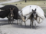 Laden Donkeys, Pal-Kotal-I-Guk, Between Chakhcharan and Jam, Afghanistan Photographic Print by Jane Sweeney