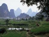 Farmland on Edge of Town, Among the Limestone Towers, Yangshuo, Guangxi, China Photographic Print by Tony Waltham