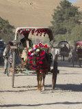 Colourful Horse Cart, Maimana, Faryab Province, Afghanistan Photographic Print by Jane Sweeney