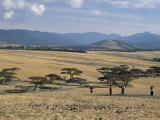Acacia Trees on High Grasslands in Front of Bale Mountains, Southern Highlands, Ethiopia, Africa Photographic Print by Tony Waltham
