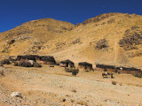 Aimaq Nomad Camps, Near Village of Jam, Ghor (Ghowr Province), Afghanistan Photographic Print by Jane Sweeney