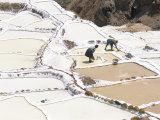 Inca Salt Pans Below Salt Spring, Salineras De Maras, Sacred Valley, Cuzco Region (Urabamba), Peru Photographic Print by Tony Waltham