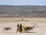 Afar Women with Donkeys Carrying Water in Very Dry Desert, Danakil Depression, Ethiopia, Africa Photographic Print by Tony Waltham