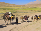 Kuchie Nomad Camel Train, Between Chakhcharan and Jam, Afghanistan Photographic Print by Jane Sweeney
