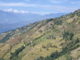 Terraced Fields in Lower Trisuli Valley, Trisuli, Himalayas, Nepal Photographic Print by Tony Waltham