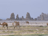 Tufa Towers at Lac Abhe, Afar Triangle, Djibouti Photographic Print by Tony Waltham