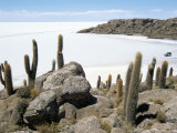 Cacti on Isla De Los Pescadores, and Salt Flats, Salar De Uyuni, Southwest Highlands, Bolivia Photographic Print by Tony Waltham