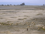 Lac Abhe in Wide Rift Valley, Relics from Old Lake at Higher Level, Djibouti Photographic Print by Tony Waltham
