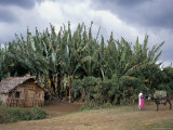 Typical House, Southern Ethiopia, Ethiopia, Africa Photographic Print by Jane Sweeney