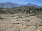 Field Patterns Near Chivay in Winter, Above the Colca Canyon, Peru, South America Photographic Print by Tony Waltham