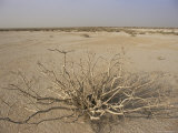 Desert Plant Between Nouadhibou and Nouakchott, Mauritania, Africa Photographic Print by Jane Sweeney