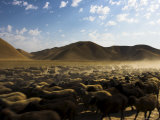 Flock of Sheep Between Maimana and Mazar-I-Sharif, Afghanistan Photographic Print by Jane Sweeney
