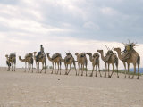 Camel Train Led by Afar Nomad in Very Hot and Dry Desert, Danakil Depression, Ethiopia, Africa Photographic Print by Tony Waltham