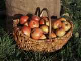 Basket of Cider Apples, Pays d'Auge, Normandie (Normandy), France Fotografisk tryk af Guy Thouvenin