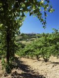 View from Vineyard of the Town of San Gimignano, Tuscany, Italy Photographic Print by Ruth Tomlinson