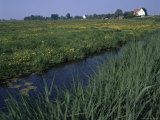 Canal in Polder and Field of Buttercups, Durgerdam, Ijsselmeer, Holland Photographic Print by I Vanderharst