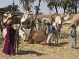Camel Market, Darwa, Egypt, North Africa, Africa Photographic Print by Doug Traverso