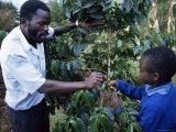 Schoolchildren Learning About Coffee, Kenya, East Africa, Africa Photographic Print by Liba Taylor