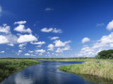 View from Riverbank of White Clouds and Blue Sky, Myakka River State Park, Near Sarasota, USA Photographic Print by Ruth Tomlinson