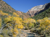 Cottonwood Trees on the Banks of the Virgin River, Zion National Park, Utah, USA Photographic Print by Ruth Tomlinson