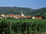 View to Village from Vineyards, Riquewihr, Haut-Rhin, Alsace, France Photographic Print by Ruth Tomlinson