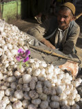 Man Selling Garlic, Bazaar, Central Kabul, Afghanistan Photographic Print by Jane Sweeney