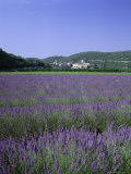 Lavender Fields and the Village of Montclus, Gard, Languedoc-Roussillon, France Photographic Print by Ruth Tomlinson