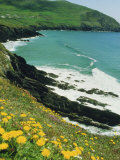 Irish Summer Colours, Dingle Peninsula, County Kerry, Munster, Republic of Ireland (Eire) Photographic Print by D H Webster